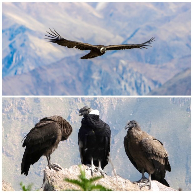 Mirador del Condor Peru