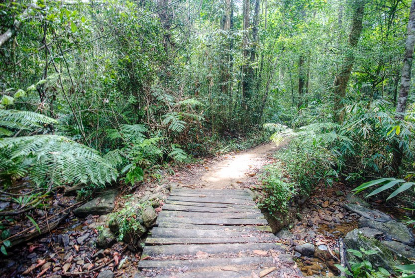 Our trail into Sinharaja Forest Reserve.