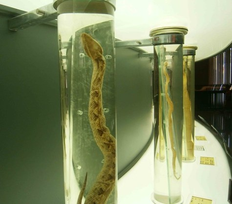 Preserved Snakes