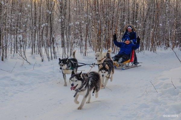 Dog Sledding, Yekaterinburg