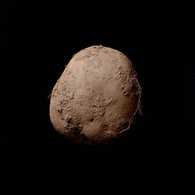 potato345_abosch_web800