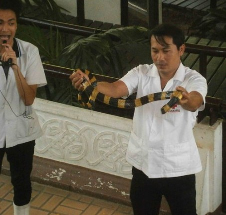 Snake Show