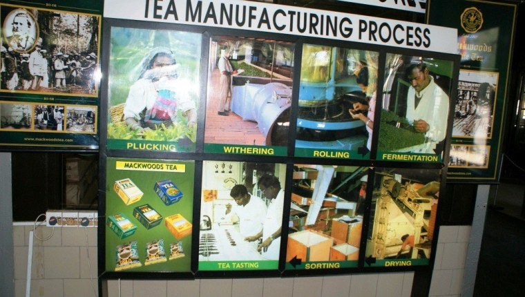43 Mackwoods Tea Factory
