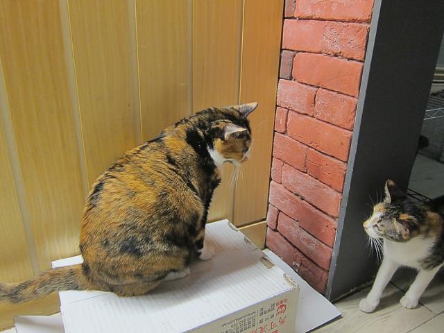 meow-bar-14