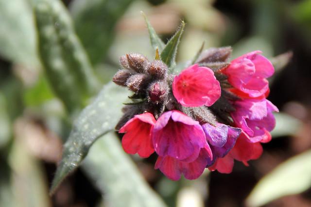 20160327_WV_Botanic_Garden_021