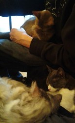 Cats on our laps
