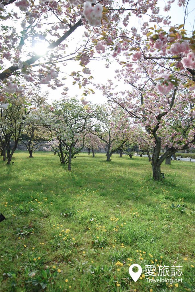 京都赏樱景点 元离宫二条城 21