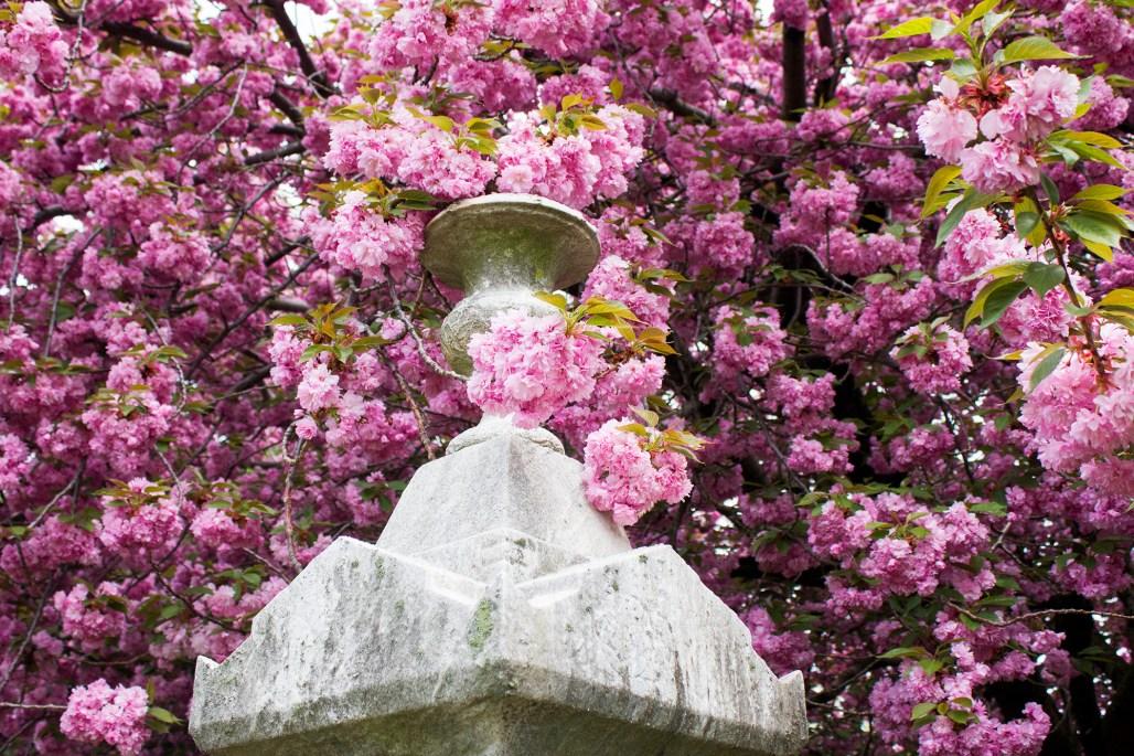 wilmington-brandywine-historical-cemetary-urn-pink-flowers