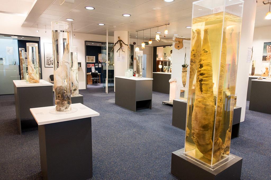 Icelandic Phallological Museum.