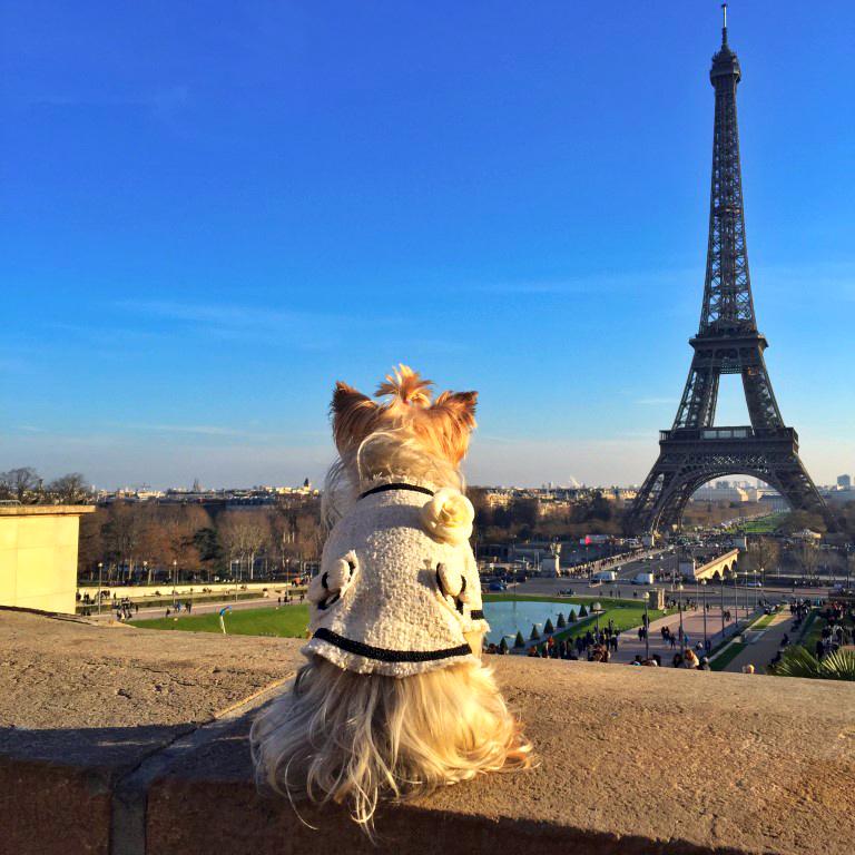 Pau mirando la Torre Eiffel de París (Francia)