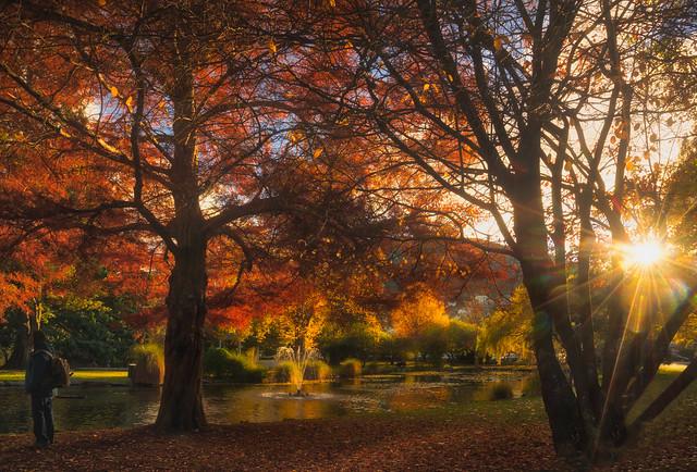 Gardens Sunrise