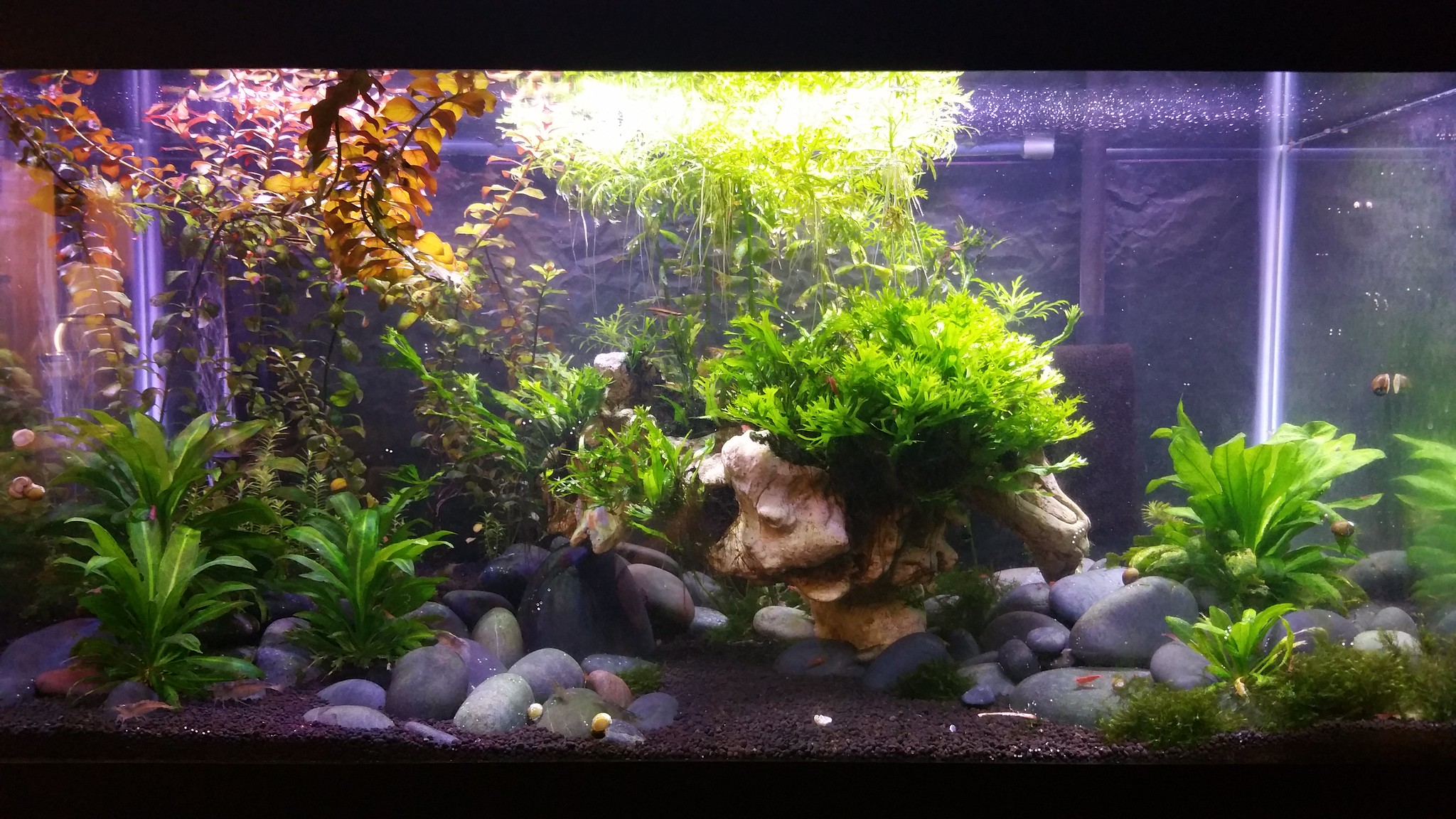 Best Led Light Planted Tank
