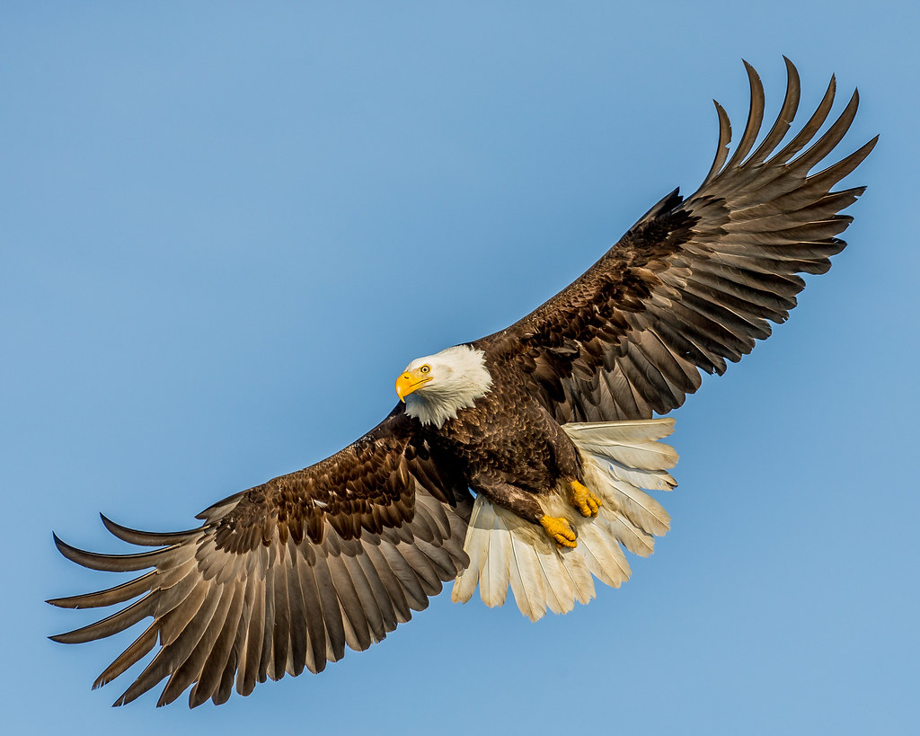 The Cross Hd Wallpaper Bald Eagle Over Homer I Have Just Finished A Tour In