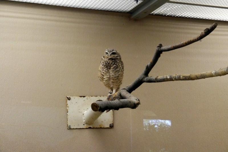 20130304 National Zoological Park, Washington DC 031