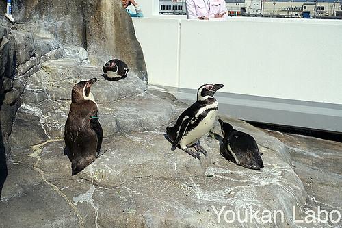 仙台うみの杜水族館26