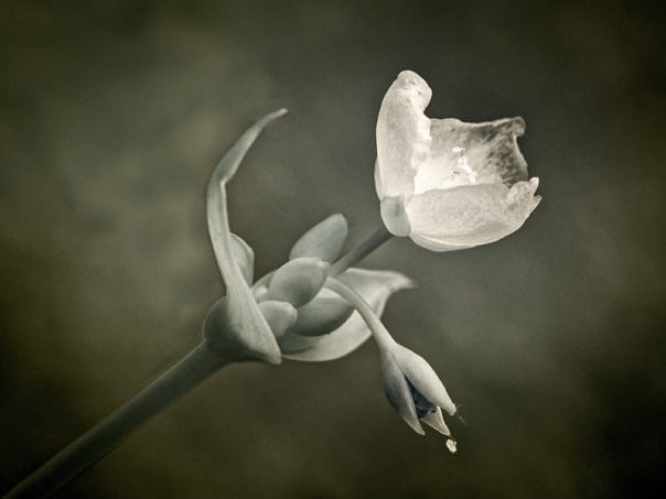 Flower in IR