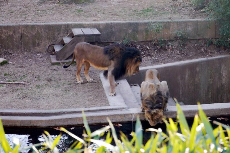 20130304 National Zoological Park, Washington DC 129