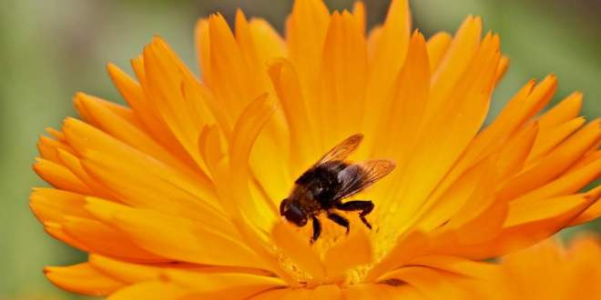 abeille-zéro-concept