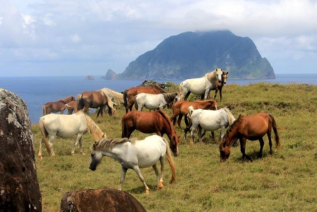 Semi-Wild Horses on Itbayat, Batanes