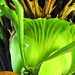 Staghorn Fern with Tree Fern