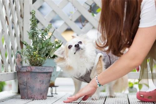 アトリエイエネコ Cat Photographer 42375206931_62f0909869 1日1猫!ワンちゃん出張撮影に行ってきました♪ 1日1猫!  猫写真 猫 犬 子猫 大阪 写真 保護猫カフェ 保護猫 ニャンとぴあ スマホ カメラ Kitten dog Cute cat