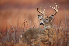 "Join Me for ""Whitetail Buck in Rut and Much More"""
