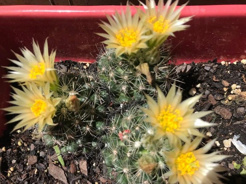 Jordan cactus