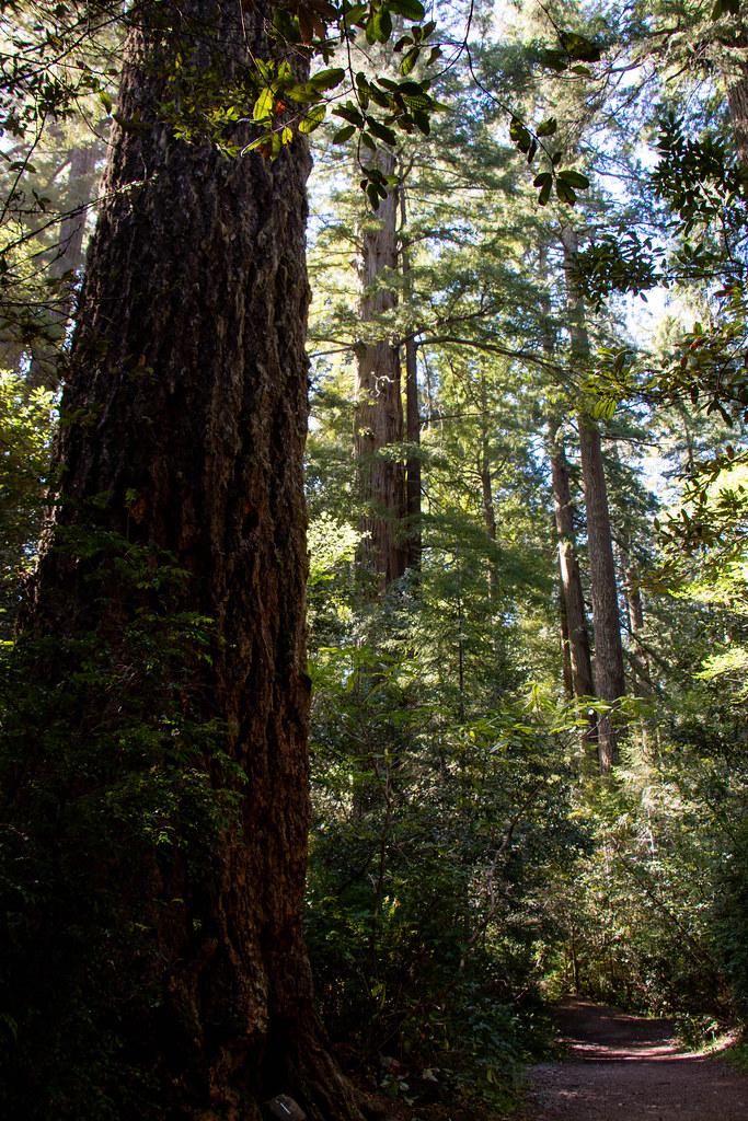 05.28. Redwoods National Park