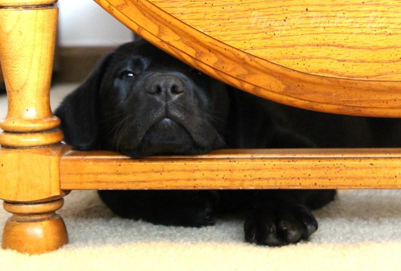 peeking through the table