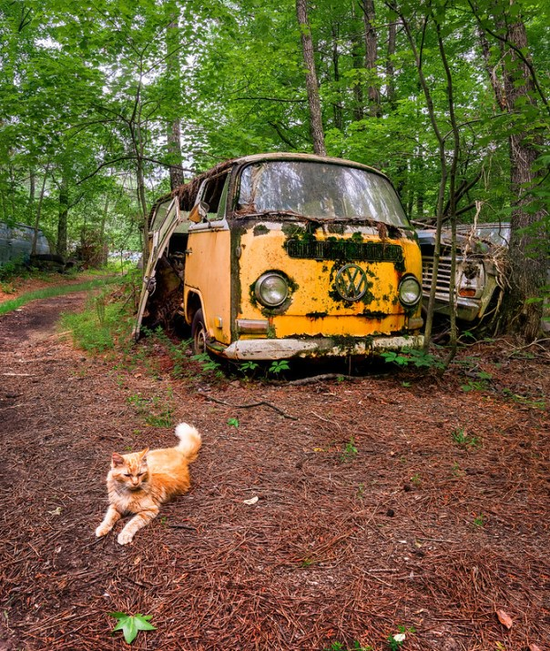 Junkyard cat and VW