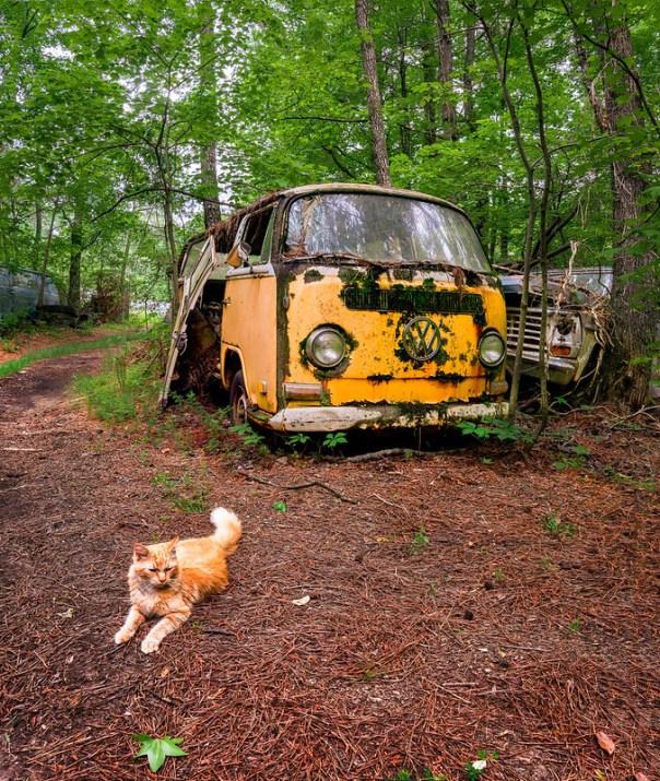 Junkyard cat and VW