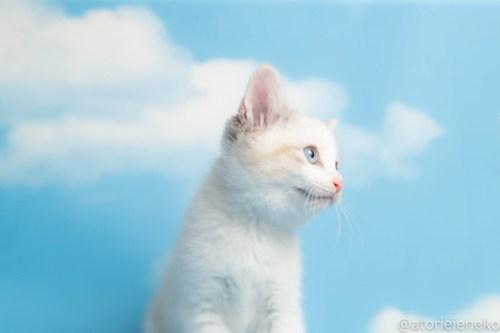 アトリエイエネコ Cat Photographer 27663734697_eb3373b106 1日1猫!おおさかねこ俱楽部 トライアル決定のレタス、パセリ、トマトちゃん♪ 1日1猫!  里親様募集中 猫写真 猫カフェ 猫 子猫 大阪 保護猫カフェ 保護猫 ニャンとぴあ スマホ カメラ おおさかねこ倶楽部 Kitten Cute cat
