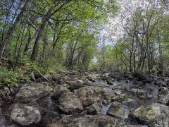 Nichols Lake Trail