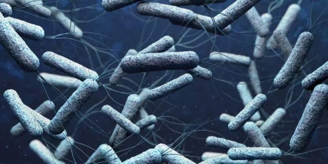 mit-probiotiques