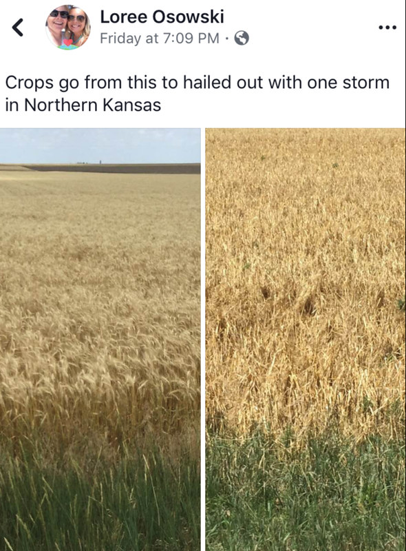 Osowski Harvesting