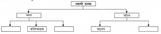 NCERT Solutions for Class 9 Science Chapter 6 (Hindi Medium) 7