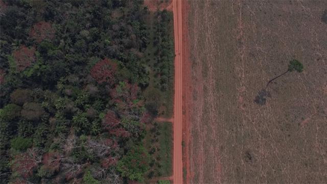 Natura incentiva conversação das Florestas