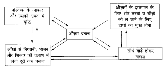 NCERT Solutions for Class 11 History Chapter 1 (Hindi Medium) 1