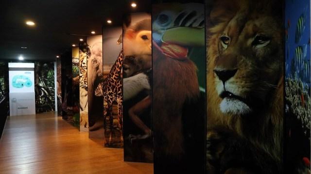 สวนสัตว์ดุสิต สวนสัตว์เขาดิน 2561 (16)