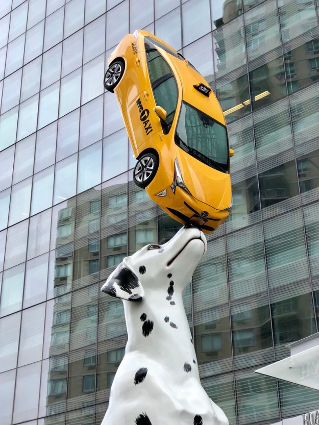 42949147892_acf3a5828f_b 30′ Dalmatian Named Spot! Balances a Yellow NYC Taxi on Its Nose at Entrance to Children's Hospital Random