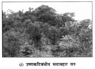 NCERT Solutions for Class 7 Social Science Geography Chapter 6 (Hindi Medium) 3