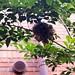 家の玄関前の木に鳥の巣が!