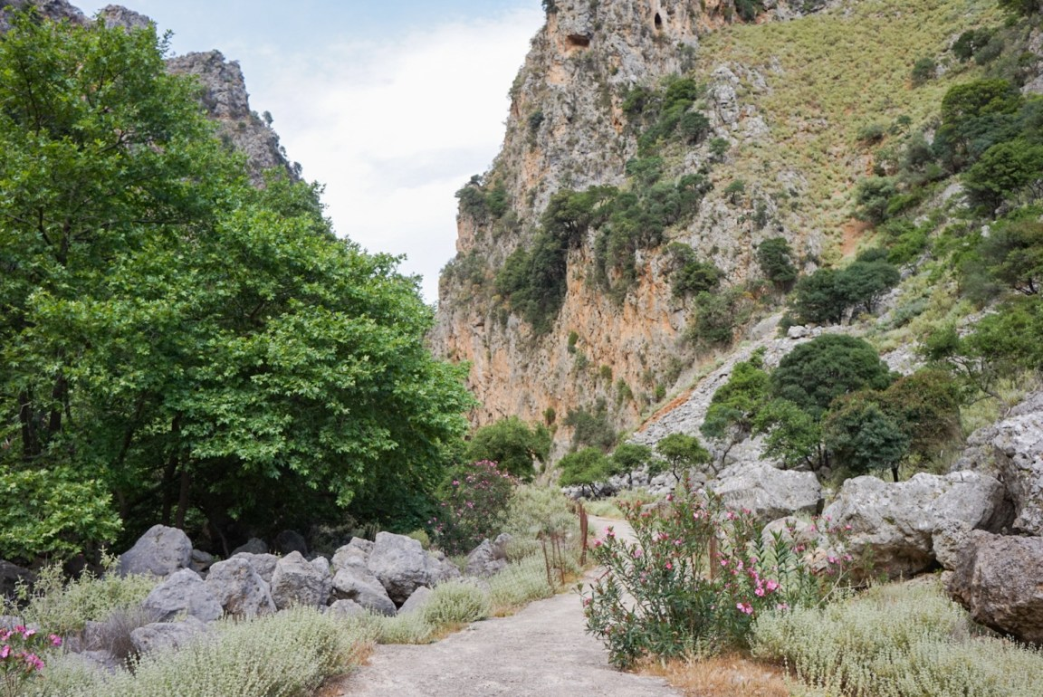 Deliana-rotko, Kreeta