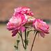 Donde florecen las flores, hay esperanza (Lady Bird Johnson)