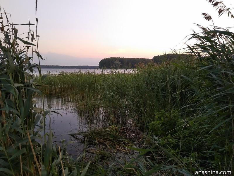 Прибрежная растительность, Пестовское водохранилище