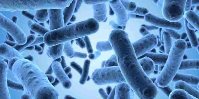 biopuce-identifier-bactérie