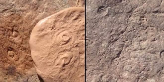 nouveaux-animaux-découverte-500-millions-années