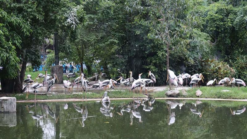 สวนสัตว์ดุสิต สวนสัตว์เขาดิน 2561 (12)