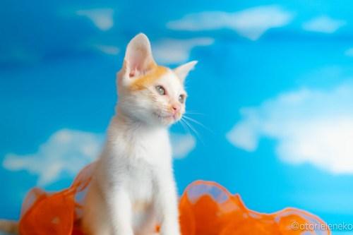 アトリエイエネコ Cat Photographer 42344331665_3f3a3a9eaf 1日1猫!おおさかねこ俱楽部 里親様募集中のモヒカンくん♪ 1日1猫!  里親様募集中 猫写真 猫カフェ 猫 子猫 大阪 初心者 写真 保護猫カフェ 保護猫 ニャンとぴあ スマホ カメラ おおさかねこ倶楽部 Kitten Cute cat