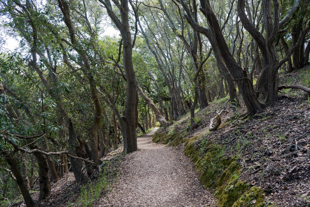 Hiking trail @ angel island